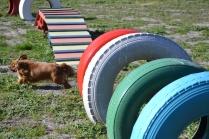 Banksia Park Puppies Odette - 2 of 12