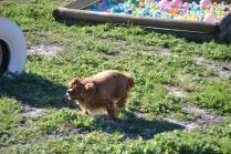 Banksia Park Puppies Odette - 3 of 12