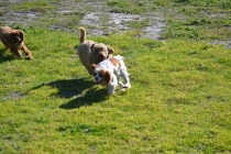 Banksia Park Puppies Odette - 4 of 12