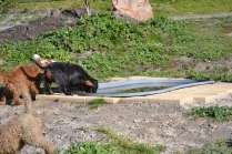 Banksia Park Puppies Odette - 8 of 12