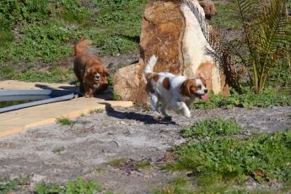 Banksia Park Puppies Odette - 9 of 12