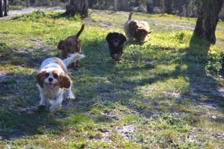 Banksia Park Puppies Ponky - 21 of 36