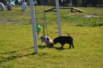 Banksia Park Puppies Ponky - 27 of 36