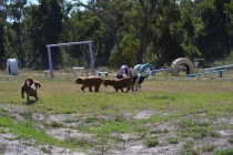 Banksia Park Pupies Kojak - 1 of 5 (3)