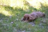 banksia-park-puppies-dana-11-of-14