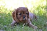 banksia-park-puppies-dana-13-of-14