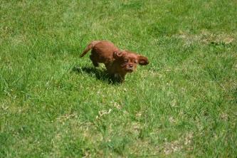 banksia-park-puppies-dana-7-of-14