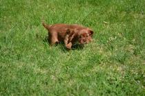 banksia-park-puppies-dana-8-of-14