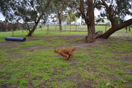 banksia-park-puppies-hailey-14-of-25
