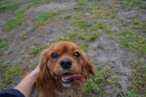 banksia-park-puppies-hannah-10-of-28