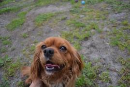 banksia-park-puppies-hannah-11-of-28