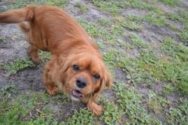 banksia-park-puppies-hannah-17-of-28