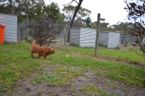 banksia-park-puppies-hannah-2-of-28