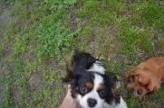 banksia-park-puppies-hannah-26-of-28