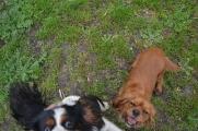 banksia-park-puppies-hannah-28-of-28