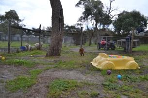 banksia-park-puppies-hannah-4-of-28