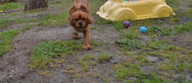 banksia-park-puppies-hannah-7-of-28