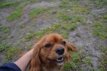 banksia-park-puppies-hannah-9-of-28