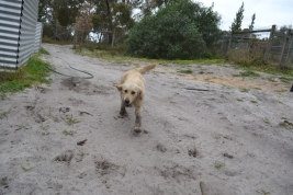 banksia-park-puppies-hilly-1-of-16