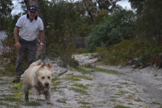 banksia-park-puppies-hilly-15-of-16