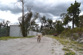 banksia-park-puppies-hilly-8-of-16