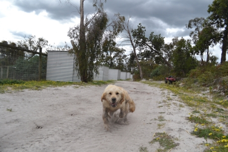 banksia-park-puppies-hilly-9-of-16