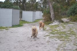 banksia-park-puppies-holky-1-of-8