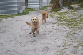 banksia-park-puppies-holky-2-of-8