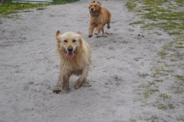 banksia-park-puppies-holky-3-of-8