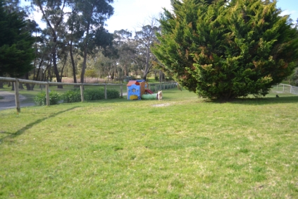 banksia-park-puppies-hunny-19-of-31