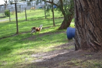 banksia-park-puppies-jose-11-of-40