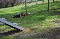 banksia-park-puppies-jose-13-of-40