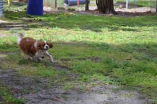 banksia-park-puppies-jose-15-of-40