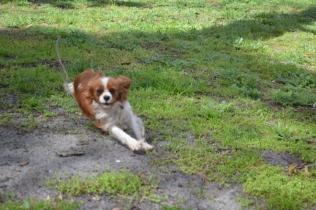 banksia-park-puppies-jose-16-of-40