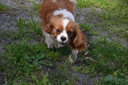 banksia-park-puppies-jose-17-of-40