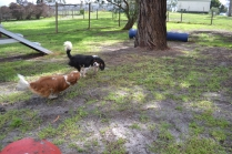 banksia-park-puppies-jose-18-of-40