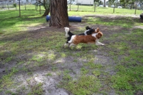 banksia-park-puppies-jose-19-of-40