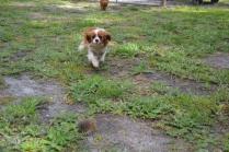 banksia-park-puppies-jose-2-of-40