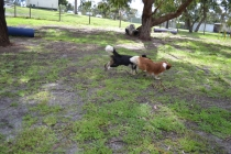 banksia-park-puppies-jose-20-of-40