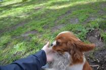banksia-park-puppies-jose-22-of-40