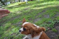 banksia-park-puppies-jose-24-of-40