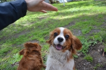 banksia-park-puppies-jose-26-of-40