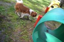 banksia-park-puppies-jose-28-of-40