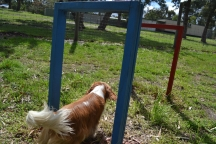 banksia-park-puppies-jose-29-of-40