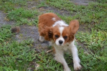 banksia-park-puppies-jose-3-of-40