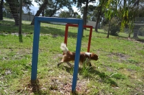 banksia-park-puppies-jose-31-of-40