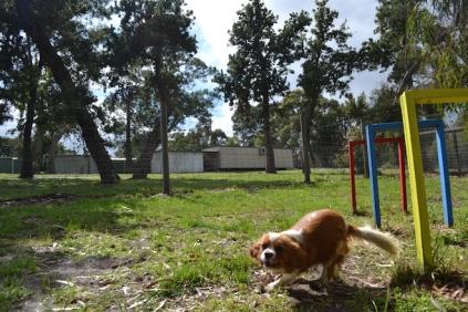 banksia-park-puppies-jose-33-of-40