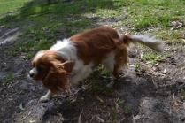 banksia-park-puppies-jose-34-of-40