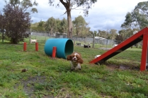 banksia-park-puppies-jose-37-of-40