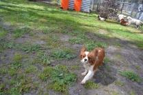 banksia-park-puppies-jose-38-of-40